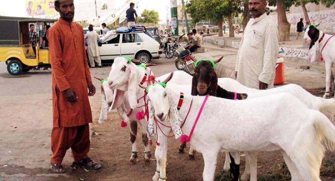 Online sale of goats sparks debate among Muslim community