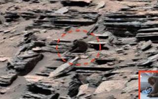 Curiosity Rover makes a new discovery on Mars- a Monkey this time!