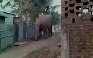 Rampaging elephant damages buildings in Siliguri