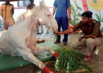 Shaktiman's leg amputated to save his life, BJP worker held