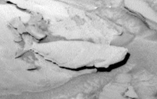 Wait! Is that a fish on Mars?