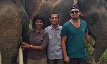 Leonardo DiCaprio fights for Indonesian elephants' future