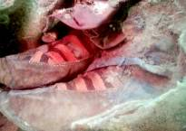 1500-year-old mummy wearing Adidas sneakers goes viral