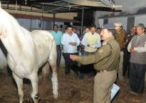 Uttarakhand Police horse Shaktimaan, injured during BJP protest, dies
