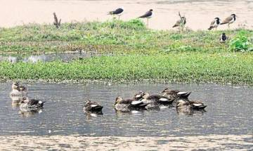Time to go green! NGT asks states to submit list of wetlands