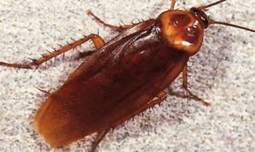 Cockroach milk may be the next super food