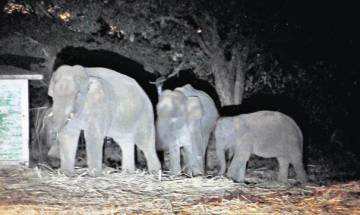 3 elephants die after being hit by Kharagpur-Adra passenger