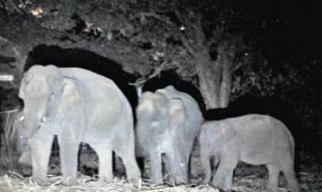 वेस्ट बंगालः ट्रेन की चपेट में आने से हाथियों की मौत, 2 घंटे तक रूट बाधित