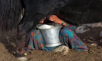 Gujarat tribal milk producers hit hard by demonetisation move