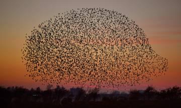 About 18,000 bird species found on earth, study calls it hidden avian diversity
