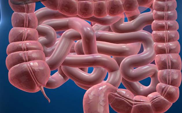 Human's appendix may serve as reservoir for beneficial gut bacteria