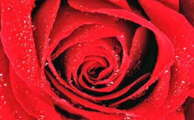 Valentines Day Week 2017 Special Know Importance And Meaning Of