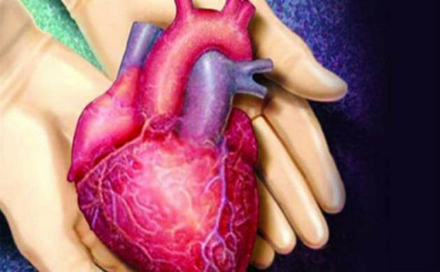 Scientists develop functional 'beating' human heart muscle