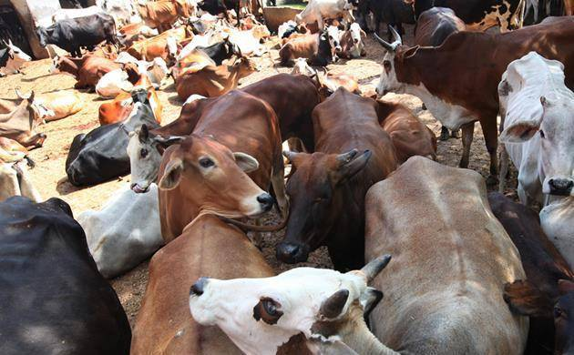 Rajasthan: 'Cow vigilantes' gherao Jaipur hotel over beef rumour