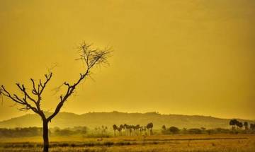 Human-caused global warming creates extreme summers, says study