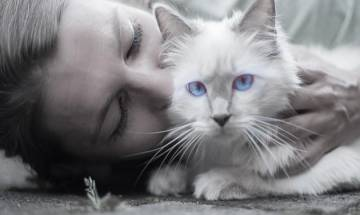 Cats love human interaction over food, says study