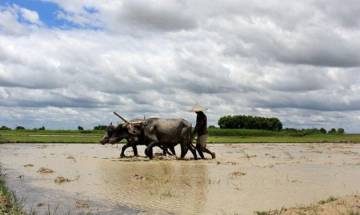 Southwest Monsoon to be normal this year, says India Meteorological Department
