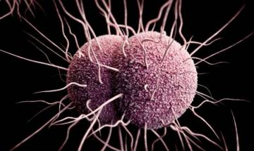 Superbugs or antibiotic-resistant bacteria existed well before the age of dinosaurs, says study
