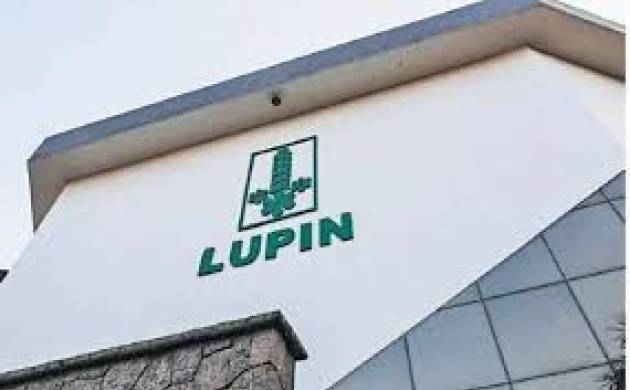 Lupin - File Photo