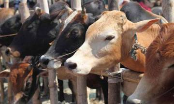 Oppostion against Centres ban on cattle sale for slaughter