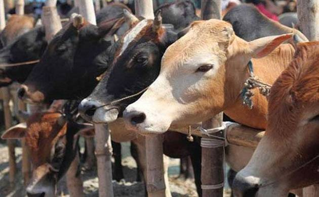UP: Police jeep tries to save cow, kills one, injures three in Balrampur (Source: PTI)