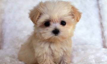 Pictures of puppies can help rekindle fading passion in marriage: Study