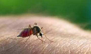 Malaria cases cross 200 mark in Delhi; cases of chikungunya and dengue also on rise