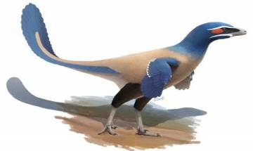 New feathered dinosaur identified by Royal Ontario Museum, named after palaeolotologist Philip Currie