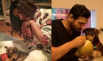 After Priyanka, John Abraham displays 'healthy' puppy love