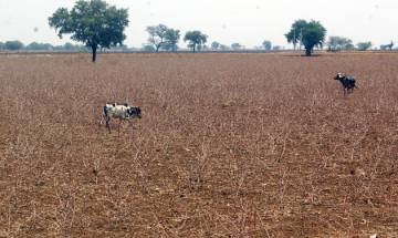 Scientists term climate change responsible for rainfall deficit in Central India