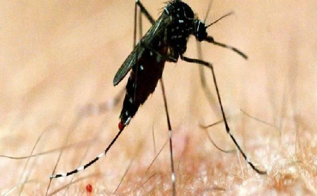Tamil Nadu  Upsurge in dengue cases; claims 3 children lives. (representational Photo)