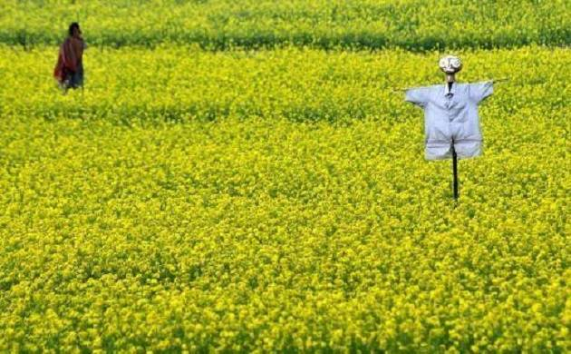 Genetically modified crops (Source: PTI)