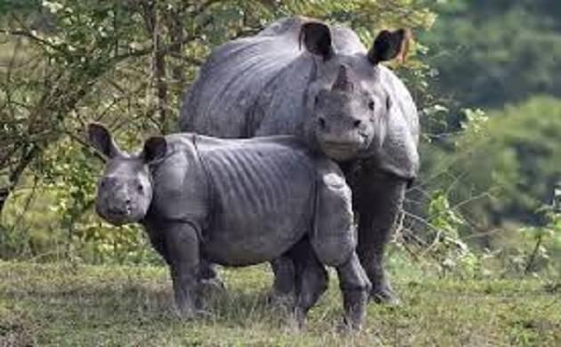 Assam: Poachers kill rhino, calf at Kaziranga National Park (File Photo)