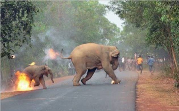 End of Humanity? Picture of Elephant and her calf on fire in West Bengal bags Photography Award by Sanctuary Asia (Facebook)