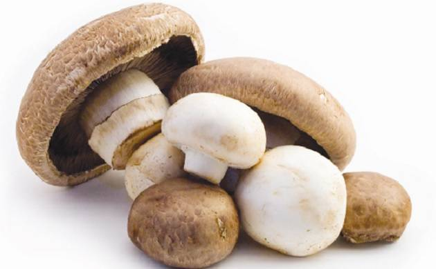 Consumption of mushrooms can help fight ageing, reveals study (Source: PTI)