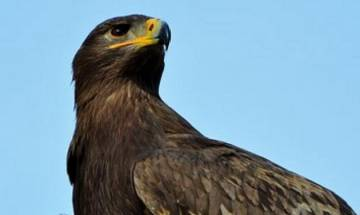 New 'Big Bird' species discovered in Galapagos Islands