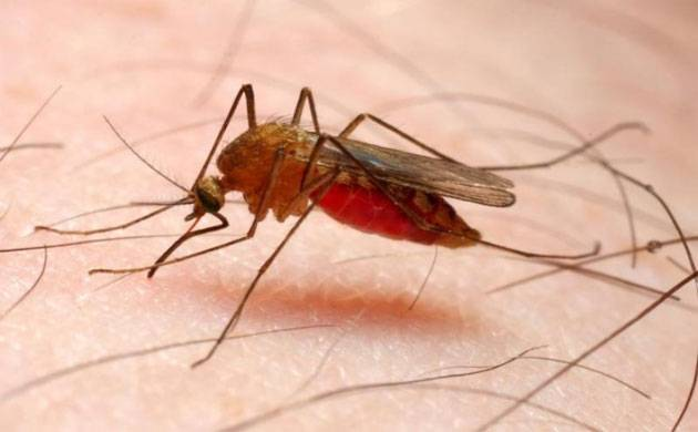 India accounts for 6 percent of global malaria cases, says WHO report (Representational Photo)