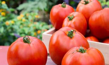 Restore lung damage by adding tomatoes and apples to your diet, says study