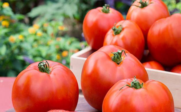 Tomatoes and apples reduce lung damage, says study (File Photo)