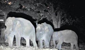 Infra development conflicts with wildlife conservation: Expert