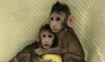 Scientists clone monkeys by process that made Dolly the sheep