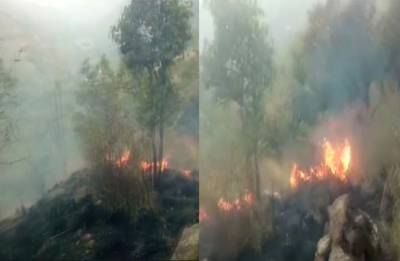 20 students caught in forest fire in Tamil Nadu, Sitharaman orders IAF to rescue them