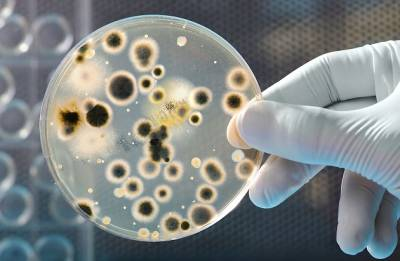 Oil eating bacterium may help clean up pollution, spills