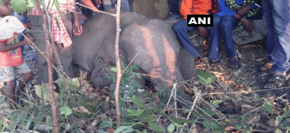 Four elephants hit by goods train in Odisha, die in spot  (Source: ANI)