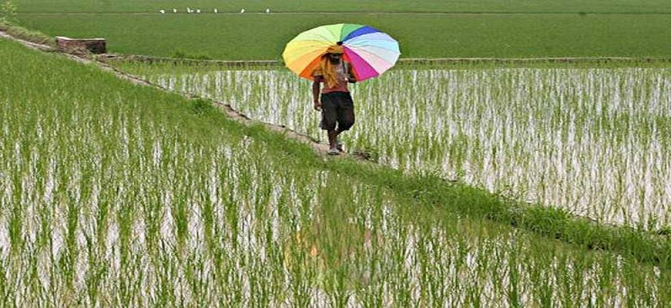 Agriculture ministry has estimated an overall foodgrain output of 277.49 MT (Source: PTI)