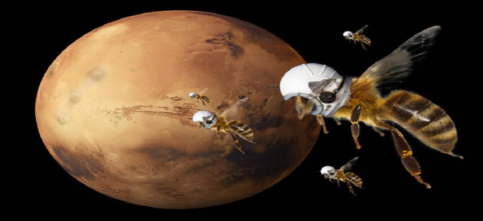 The bees will be able to read the atmosphere under the low gravity of Mars (Source: PTI)