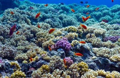The reefs and underwater world- a fascination