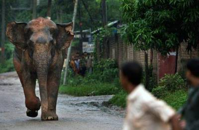 Elephants pull down mud house: 2 children killed