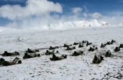 Watch: At 18,000 feet, ITBP personnel perform yoga in cold desert
