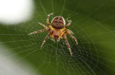 Six new spider species named after Enid Blyton characters